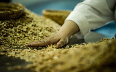 Nectarome – Processus d'extraction de l'huile d'Argane