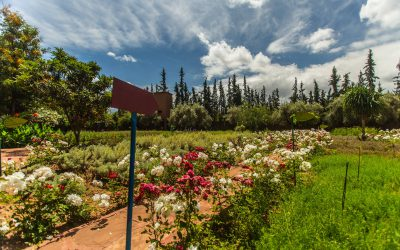 Nectarome – Road to Cop 22 – Green tourism in Marrakesh